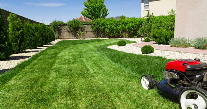 Summer Lawn Care Made Easy Mcdonough Landscaping