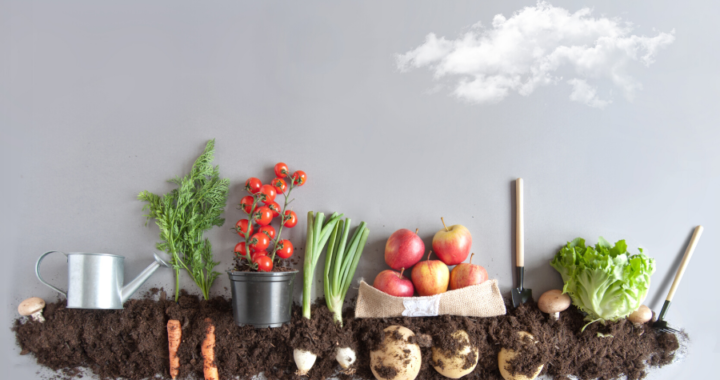 Planting a vegetable garden