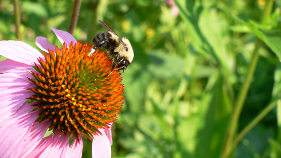 landscaping trends - pollinator gardens