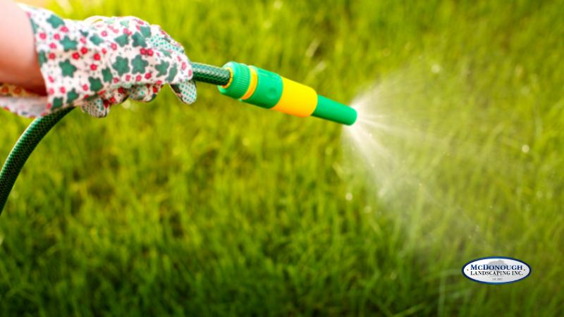 Simple Lawn Care Basics  - Watering