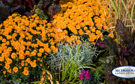 fall plants and flowers